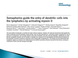 What are  dendritic  cells and what do they do?