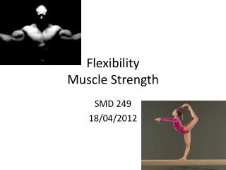Flexibility Muscle Strength