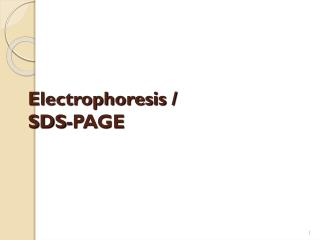Electrophoresis /  SDS-PAGE