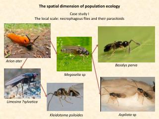 The spatial dimension of population ecology