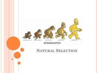 Evolutionary biology after Darwin