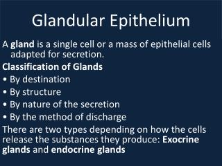 Glandular Epithelium