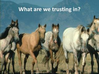 What are we trusting in?