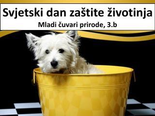 Svjetski dan zaštite životinja Mladi čuvari prirode, 3.b