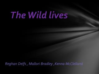 The Wild lives