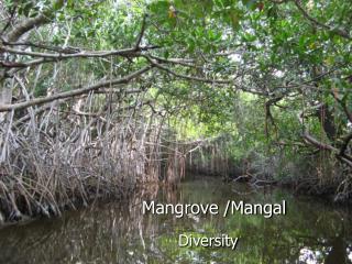 Mangrove /Mangal