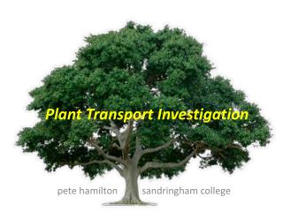 Plant Transport Investigation