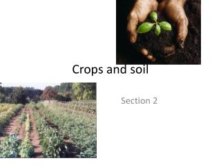 Crops and soil