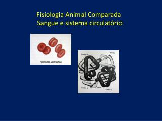 Fisiologia Animal Comparada Sangue e sistema circulatório
