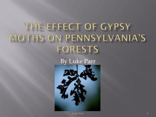 The Effect of Gypsy moths on Pennsylvania's Forests