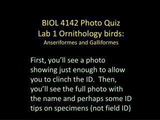 BIOL 4142 Photo Quiz Lab 1 Ornithology birds: Anseriformes and Galliformes