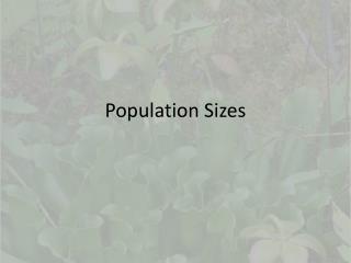 Population Sizes