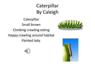 Caterpillar  By  Caleigh