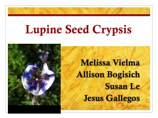 Lupine Seed  Crypsis