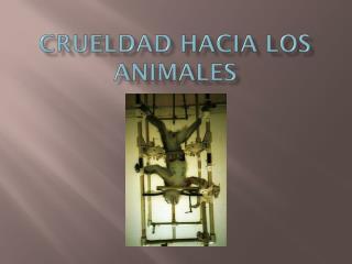 CRUELDAD HACIA LOS ANIMALES