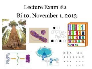 Lecture Exam #2