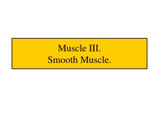 Muscle III. Smooth Muscle.