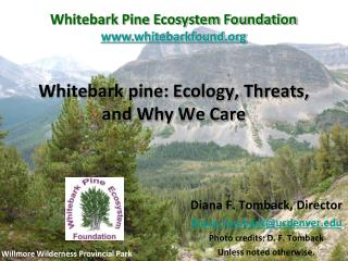 Whitebark pine: Ecology, Threats,  and Why We Care