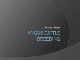 Angus Cattle Breeding