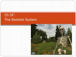 Ch 5F: The Skeletal System