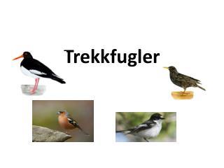 Trekkfugler