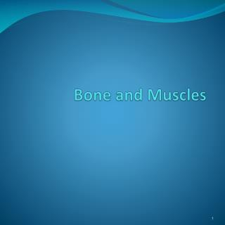 Bone and Muscles
