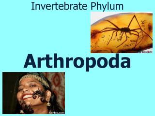 Invertebrate Phylum Arthropoda