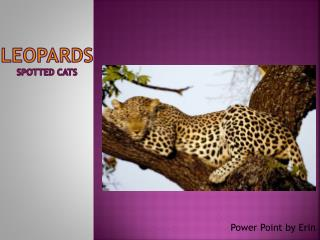 Leopards spotted cats