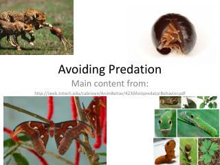 Avoiding Predation