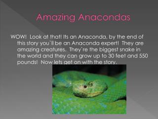 Amazing Anacondas