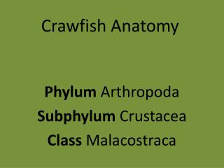 Crawfish Anatomy