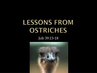 Lessons from Ostriches