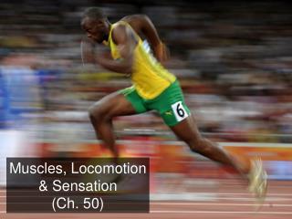 Muscles, Locomotion & Sensation (Ch. 50)