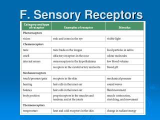 F. Sensory Receptors