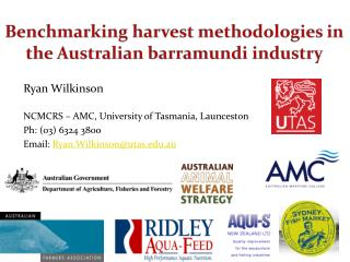 Benchmarking harvest methodologies in the Australian barramundi industry