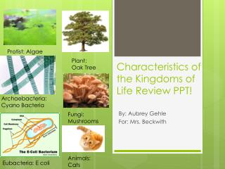 Characteristics of the Kingdoms of Life Review PPT!