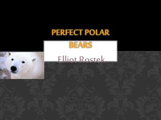 Perfect Polar Bears