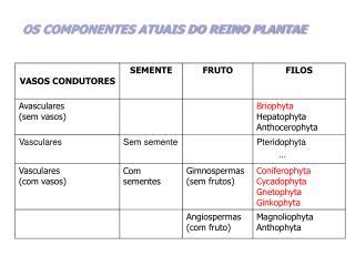 OS COMPONENTES ATUAIS DO REINO PLANTAE