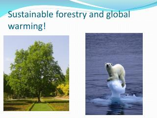 Sustainable forestry and global warming!