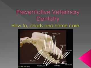 Preventative Veterinary Dentistry