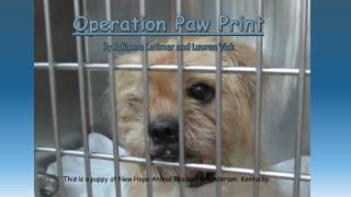 Operation Paw Print