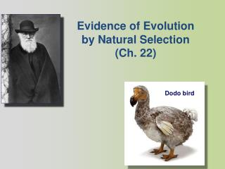 Evidence of Evolution by Natural  Selection (Ch. 22)