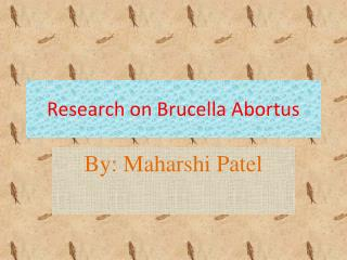Research on Brucella Abortus