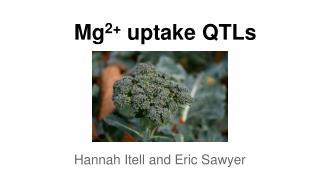 Mg 2+  uptake QTLs