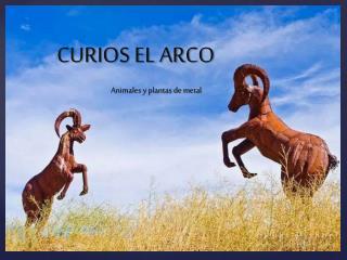 CURIOS EL ARCO