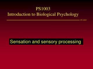 Sensation and sensory processing