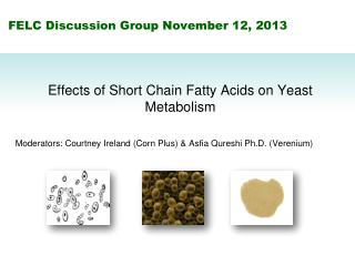 FELC Discussion Group November 12, 2013