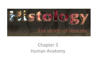 Chapter  3  Human  Anatomy