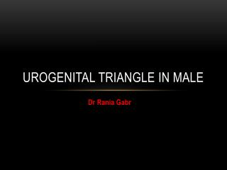 Urogenital triangle in male