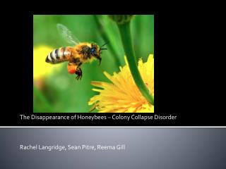 The Disappearance of Honeybees  –  Colony Collapse Disorder